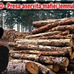 Gunoiul de Corfu de la TVMNEAMT.RO, protectorul mafiei lemnului!