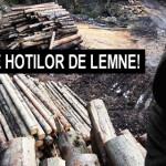 VIDEO – Pe urmele hotilor de lemne din Neamt!